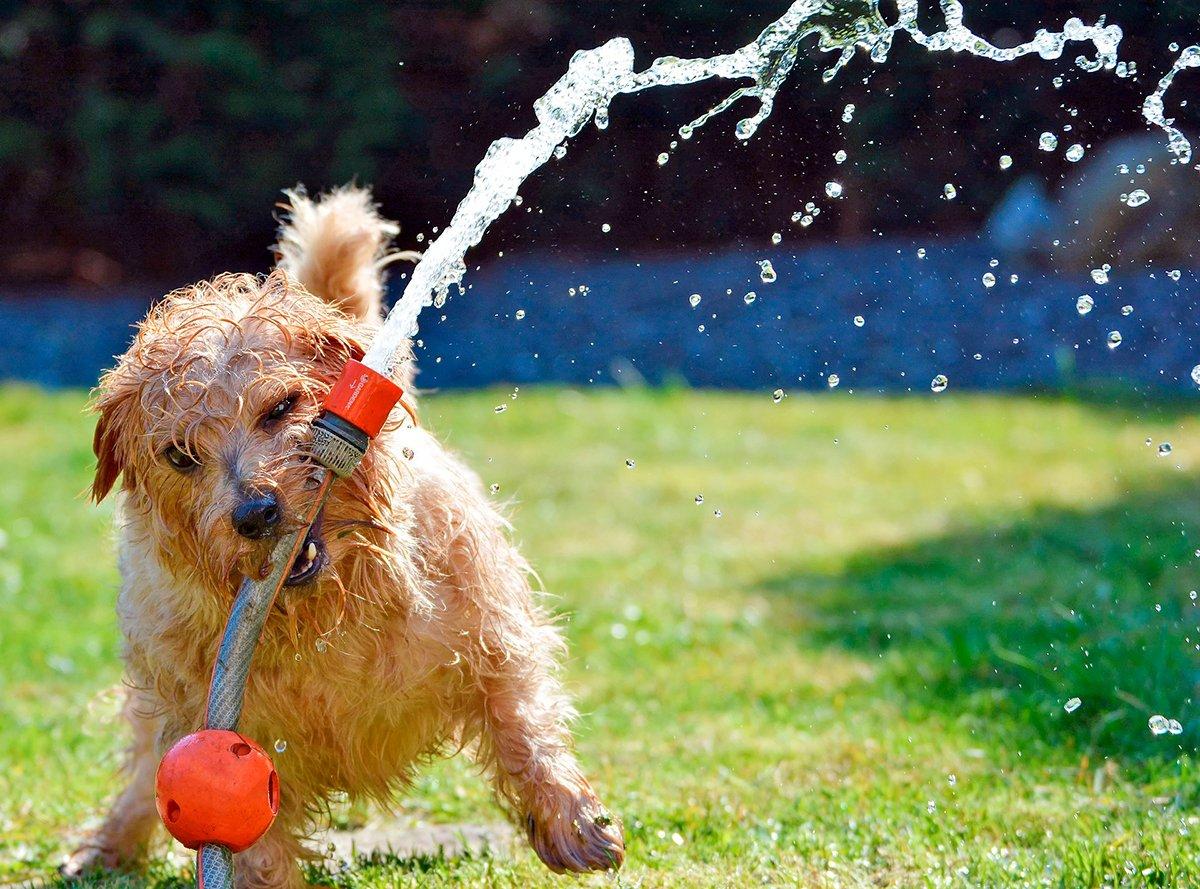 Qué razas de perros sufren más el calor y cómo evitar una insolación